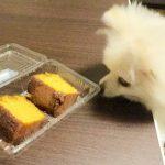 ケーキ食べる?