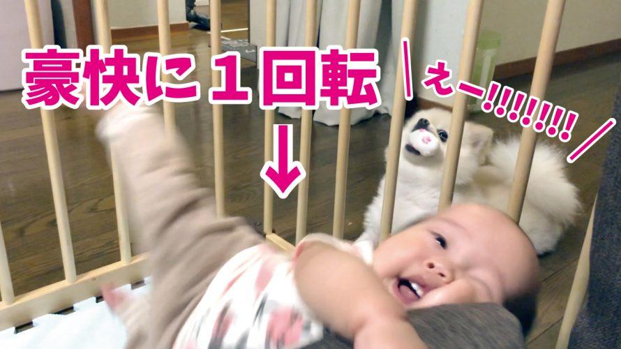 【悲劇】ポメラニアンと遊ぶ赤ちゃんが!豪快に1回転したらさすがに泣くよね??