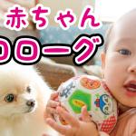 【プロローグ】ポメラニアンと娘の成長記1歳まで Prologue