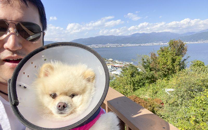 ジャスミン怪我の具合と諏訪湖サービスエリア
