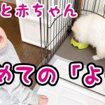 【犬と赤ちゃん】娘の初めての「よし」が可愛すぎた
