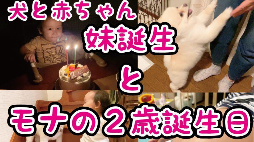 【犬と赤ちゃん】妹誕生とモナ2歳の誕生日