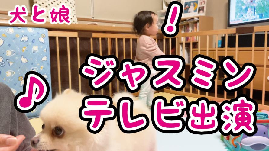 【ポメラニアン】犬のジャスミンが長女と一緒にテレビ主演しました!