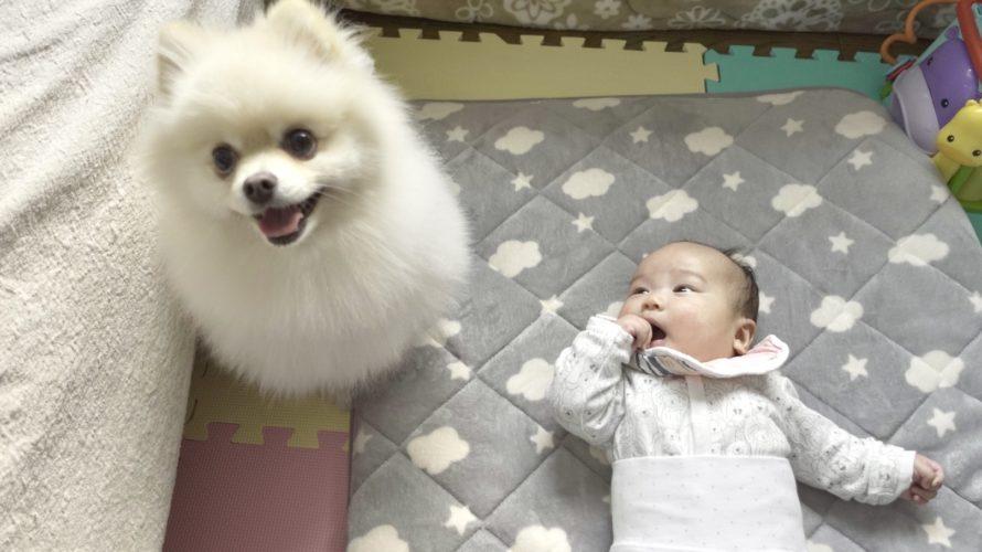 ベビーシッターを頼んだら犬がやって来た